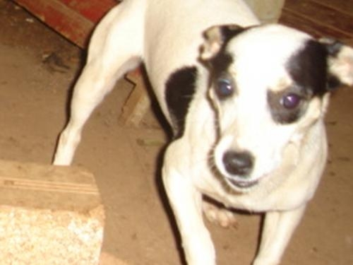 Doação de cachorras
