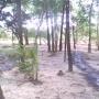 Terrenos em Curuçá-Pará-Brasil
