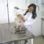 castração e hotelzinho de cães