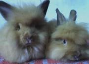 Mini coelho e gaiolas