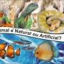 Rochas aquario