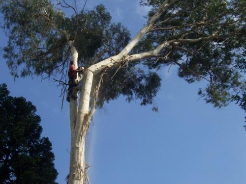 Corte de árvore curitiba