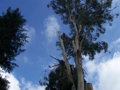 Fotos de Corte e poda de árvores  curitiba 1