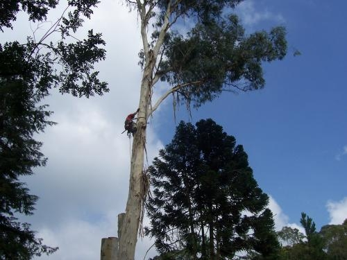 Fotos de Corte e poda de árvores  curitiba 2