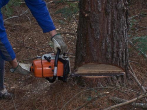 Fotos de Corte e poda de árvores  curitiba 3