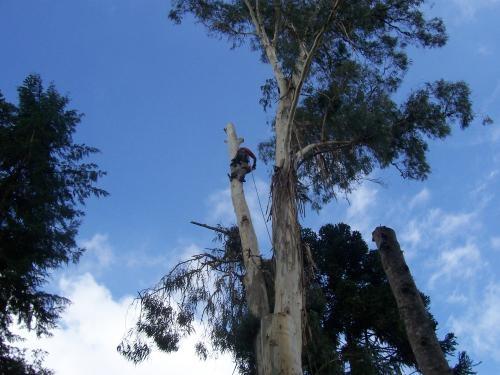Corte e poda de árvores curitiba