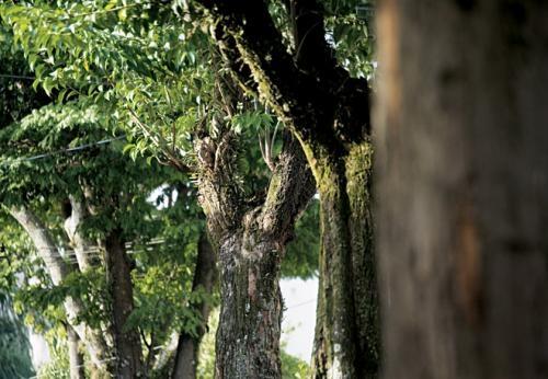 Fotos de Vendo maravilhoso apto no breeze santana 4