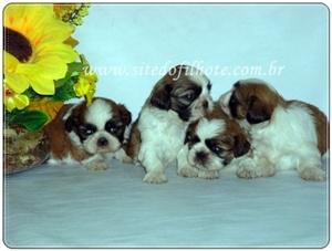 Fotos de Filhotes a venda, filhotes, venda de filhotes, filhotes de cachorro, filhotes de 2