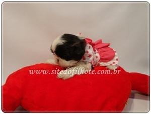 Fotos de Filhotes a venda, filhotes, venda de filhotes, filhotes de cachorro, filhotes de 3