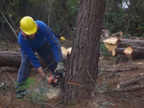 Corte e poda de árvore curitiba