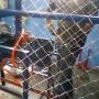 maquina fabricar telas arames alambrado galvn e pvc bitolas 12 14 16 18