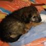 Doa-se Filhote de Cachorro Fêmea (Sem Raça Defiinida)