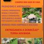 Bonsai da Tijuca Plantas e Paisagismo