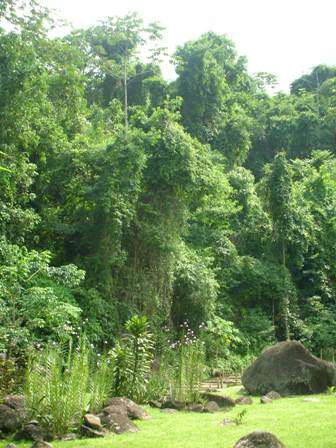 Vendo áreas para compensação ambiental