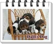 Lindos filhotes de basset hound