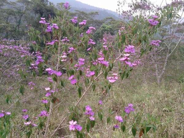 Oportunidad venta de 15 hectarias en el oriente ecuador