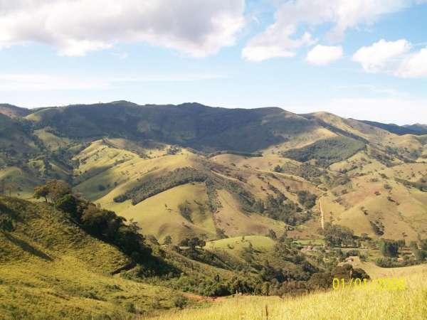 Reflorestamento, manejo florestal, crédito de carbono, fazendas, eucalipto, arrendar pasto, recomposição ambiental, mata atlântica, área de proteção permanente