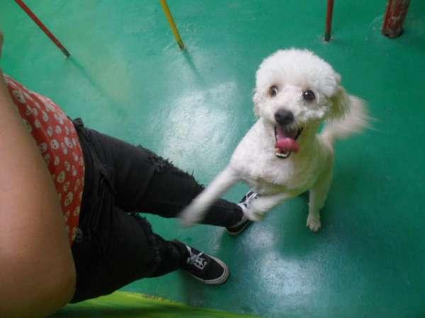 Hospedagem para animais localdogshotel 20233597 ou 28034591..
