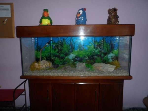 Vendo um aquario com movel..