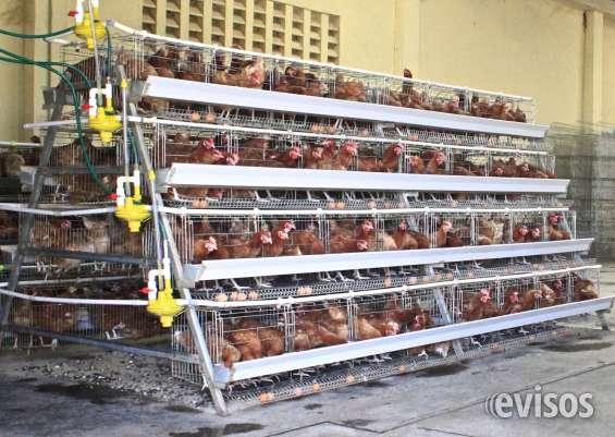 Gaiolas para galinhas