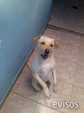 Dog trainer adestramento de cães