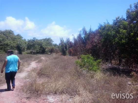 Fotos de Terreno 24.534 ha litoral sul de alagoas ,massagueira 3
