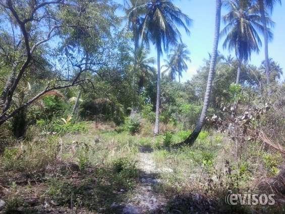 Fotos de Terreno 24.534 ha litoral sul de alagoas ,massagueira 7