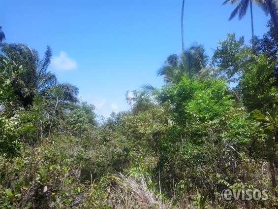 Fotos de Terreno 24.534 ha litoral sul de alagoas ,massagueira 9