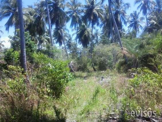 Fotos de Terreno 24.534 ha litoral sul de alagoas ,massagueira 4