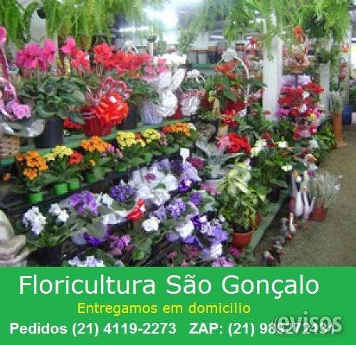 Floricultura em magé