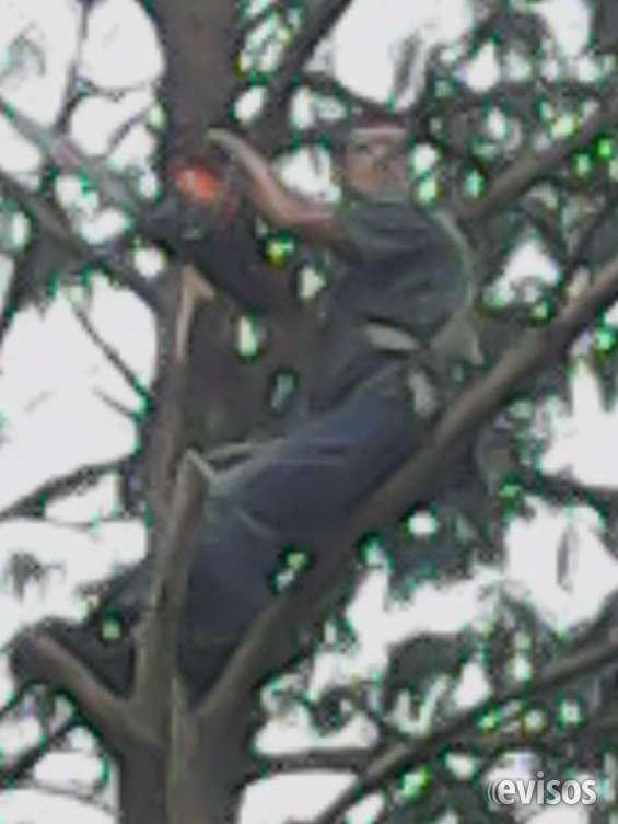 Corte de árvores 11-98621-3420