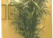 Plantas e Vasos (Locação e Venda)