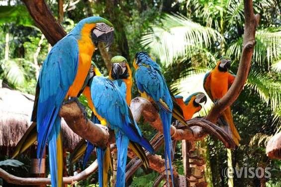 Araras no parque das aves .