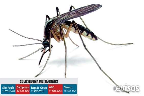 Dedetizadora mosquitos | dedetização mosquitos