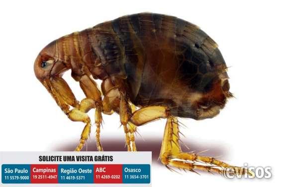 Dedetizadora pulgas | dedetização pulgas
