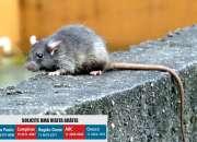 Dedetizadora Ratos | Dedetização Ratos