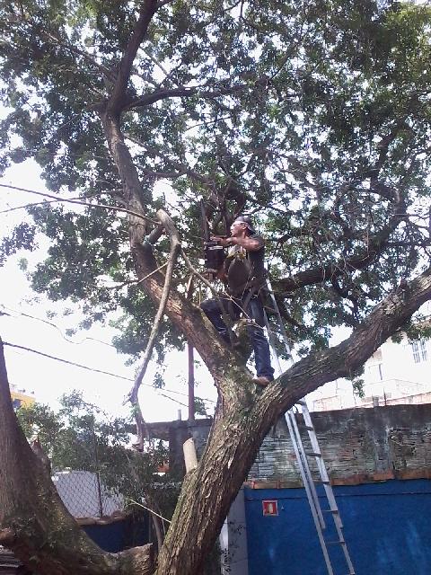 Remoção de árvores