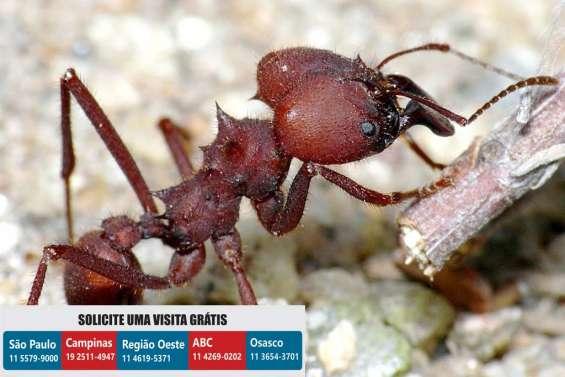 Dedetizadora ks dedetização formigas