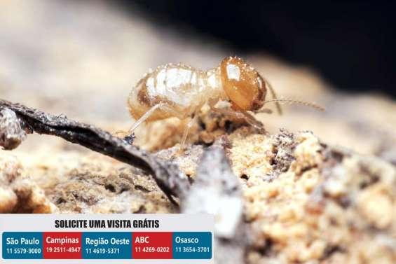 Dedetizadora ks dedetização insetos
