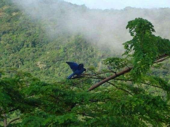 Fotos de Sítio 2 hectares - escritura pública - vargem grande - floripa/sc 6