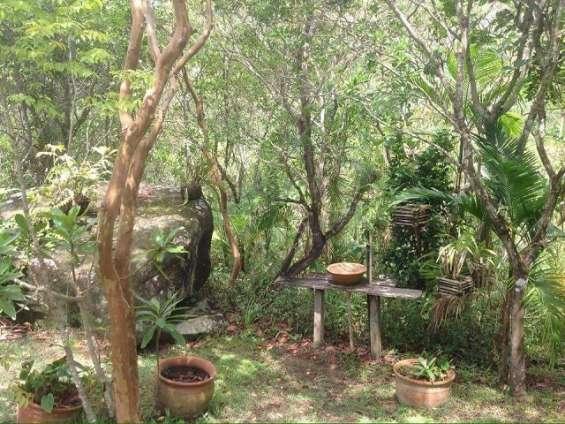 Fotos de Sítio 2 hectares - escritura pública - vargem grande - floripa/sc 7