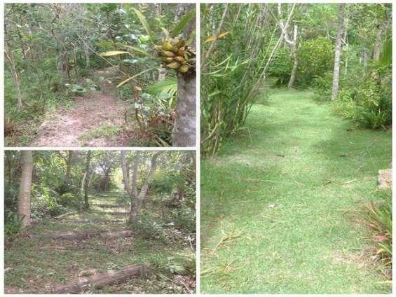 Fotos de Sítio 2 hectares - escritura pública - vargem grande - floripa/sc 2