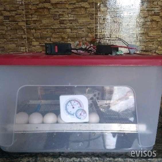 Chocadeira de 20 a 30 ovos totalmente automática
