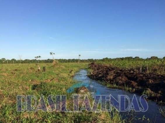 Fazenda em canavieiras ba 105 hectares