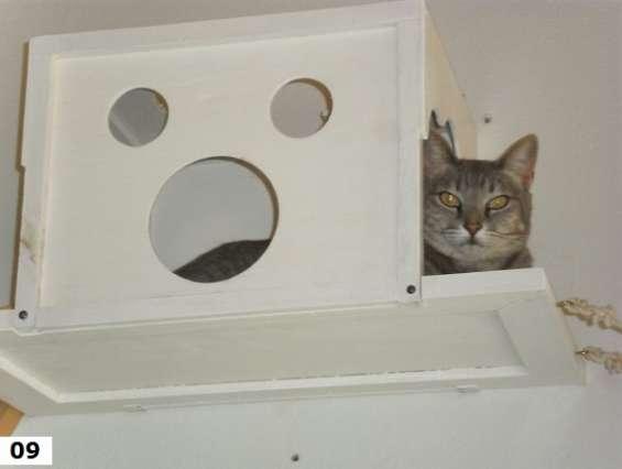 Gatos - acessórios - gatos