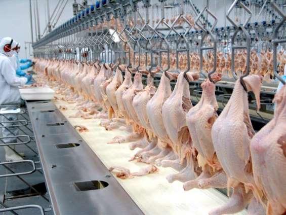 Frigorífico de frangos nordeste