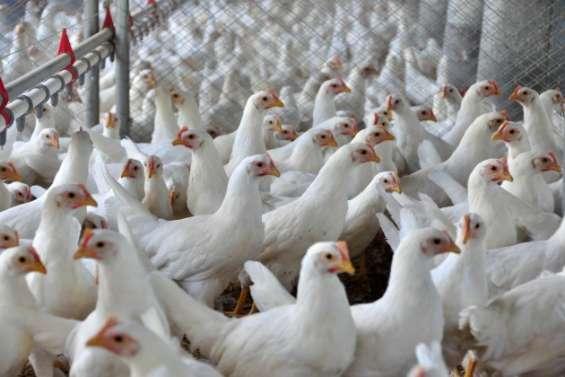 Frigoríficos de frangos compro